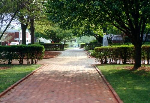 Brick streets on the UM campus.